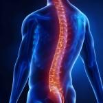 Abbildung Wirbelsäule parietale Osteopathie