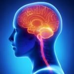 Abbildung menschlicher Kopf craniosacrale Osteopathie